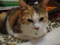 2010Apr3-Lilina6.jpg