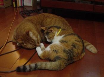 2010Apr3-Ram&Lilina.jpg