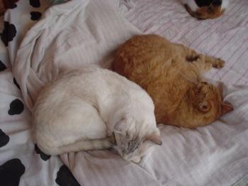 2011Nov6-Sunny&Ram1.jpg